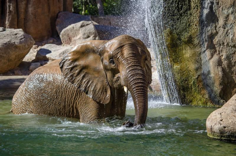 Octubre 2019 - BIOPARC Valencia - Elefante jugando en el agua