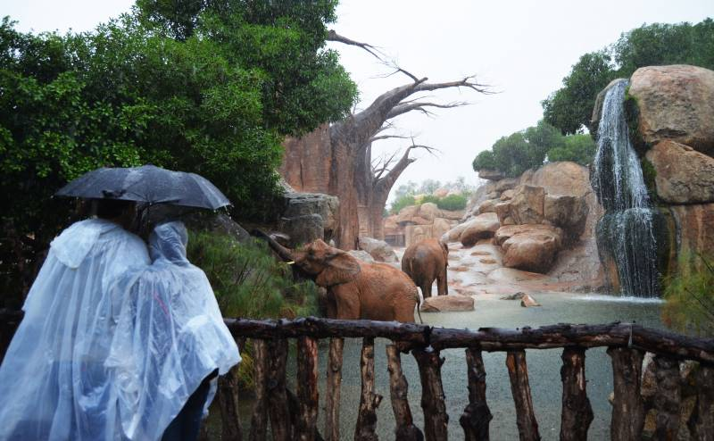 Un día de lluvia - visitantes observando a los elefantes - BIOPARC 2018