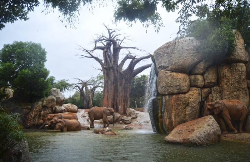 Un día de lluvia - elefantes jugando en el lago - BIOPARC Valencia 2018