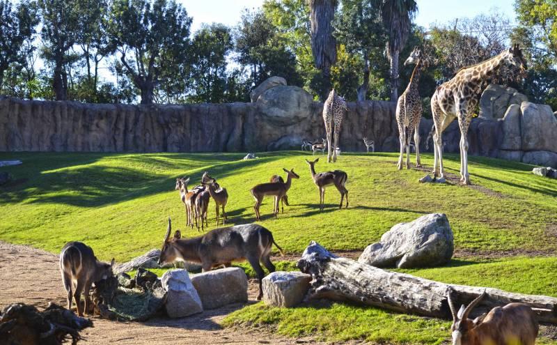 Sabana africana de BIOPARC Valencia - manadas de animales - 2018