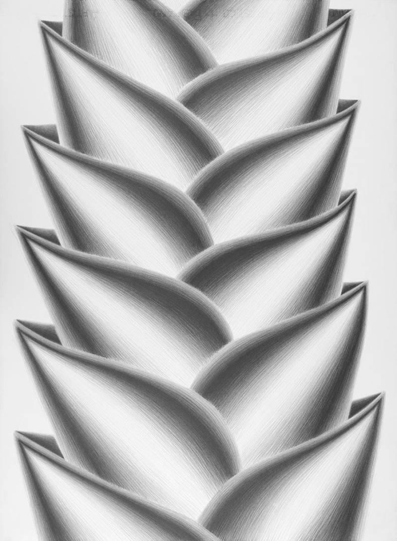 Heliconia lulius, 2012. Serie Heliconias. Lápiz grafito sobre papel, 76 x 56 cm./ EPDA