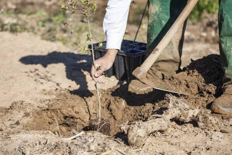 Trabajos del Proyecto Cañaveral en el Barranco del Poyo