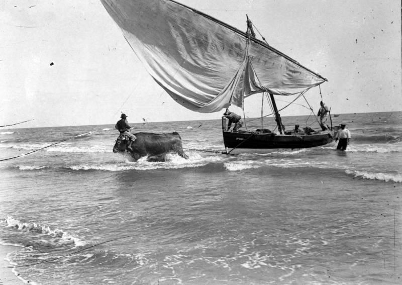 Pesca del bou. Foto de Martin Vidal Romero 1900