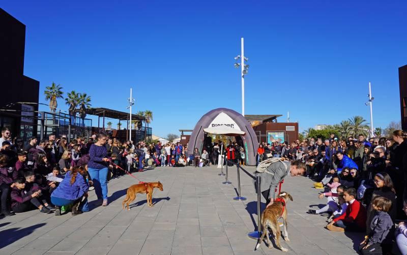 15 desfile AUPA - Fundación BIOPARC - 15 diciembre 2019 plaza exterior de BIOPARC Valencia