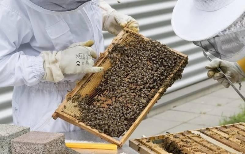 Imagen de archivo apicultura./ EPDA