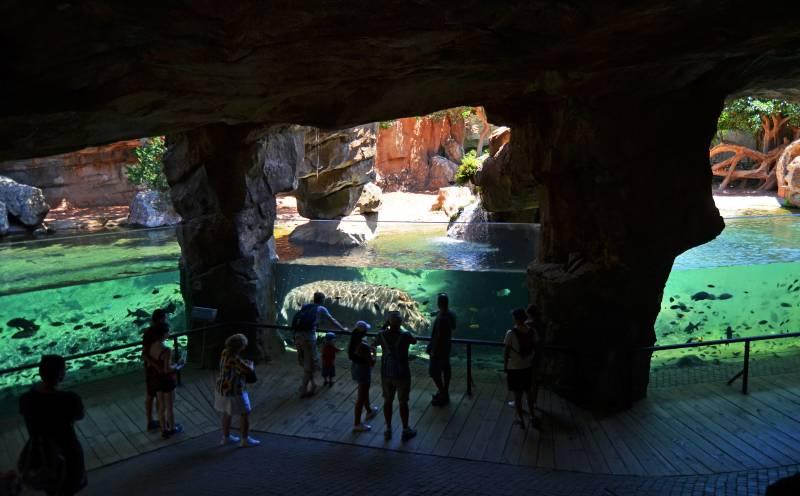 Visitantes en la cueva de Kitum - observando a los hipopótamos - BIOPARC Valencia
