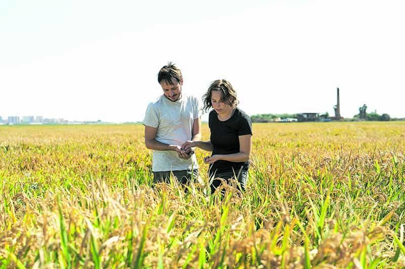 Teresa i Miquel als seus arrossars al Parc Natural de l?Albufera on produixen el seu arròs ecológic. / carles rodrido
