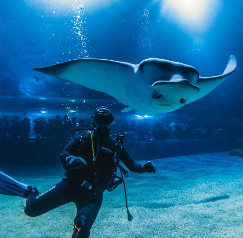 El Oceanogràfic supera en noviembre el récord de 1,5 millones de visitantes