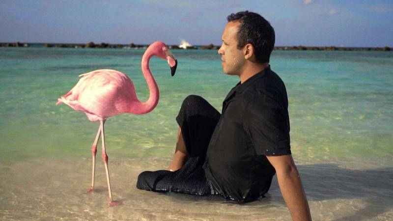 ?The mystery of the Pink Flamingo?./ EPDA