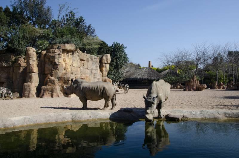 Animales en la Sabana africana de BIOPARC. EPDA