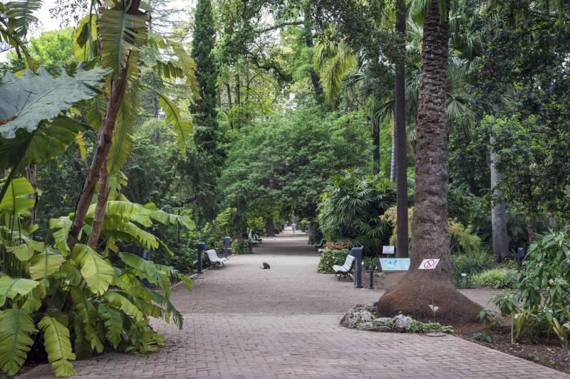 10 razones por las que visitar el Jardín Botánico de València