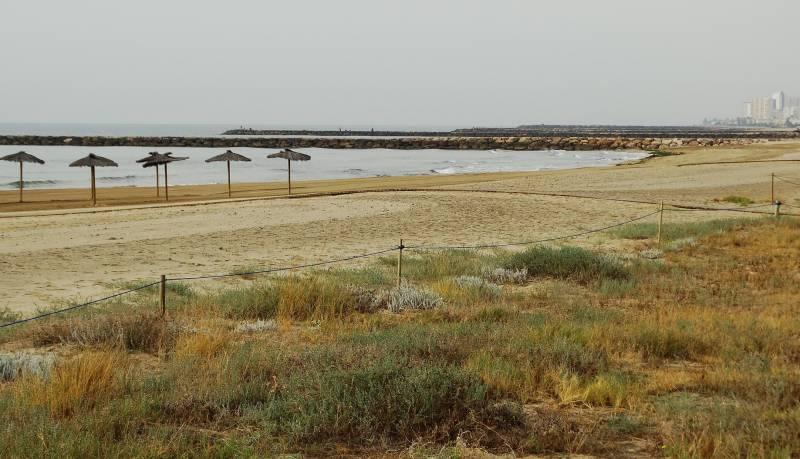Ecosistemes dunars