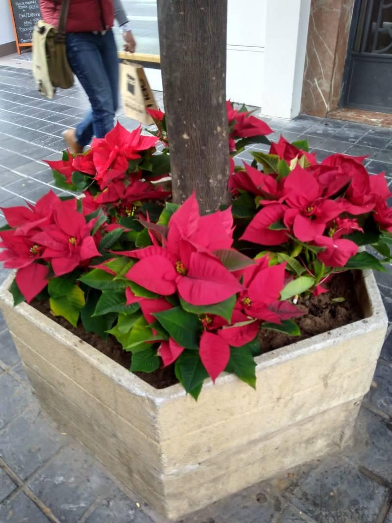 Flors de Nadal València