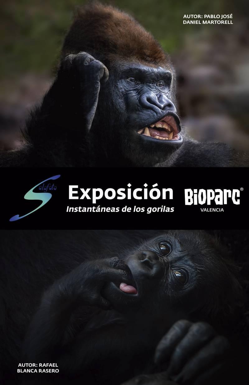 """Exposición fotográfica """"Instantáneas de los gorilas"""" en BIOPARC Valencia"""