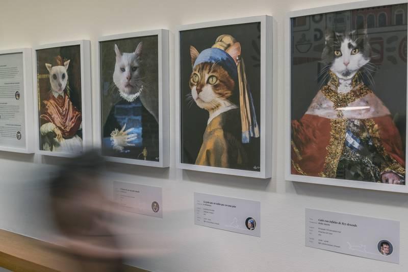Exposición gatos restaurante Oslo./ EPDA
