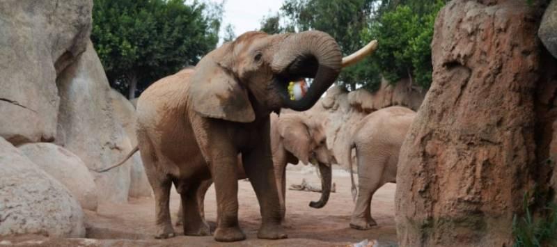 Elefantes en Bioparc