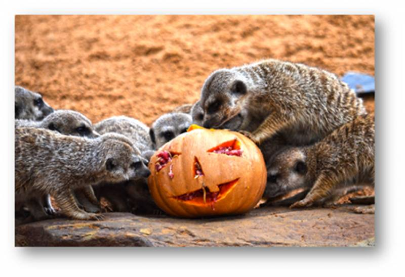 Halloween en Bioparc