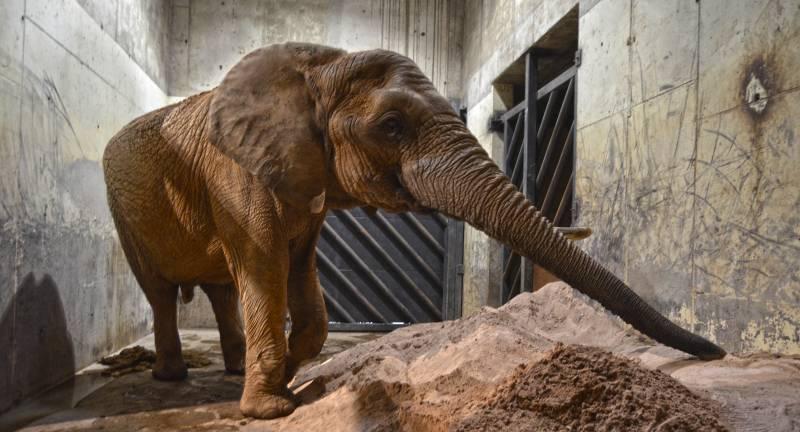 BIOPARC Valencia - enero 2019 - medidas extraordinarias contra el frío - cama elefantes