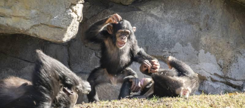 Animales en Bioparc. EPDA