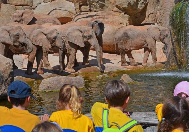 Grupo escolar cara a cara con los elefantes en BIOPARC Valencia