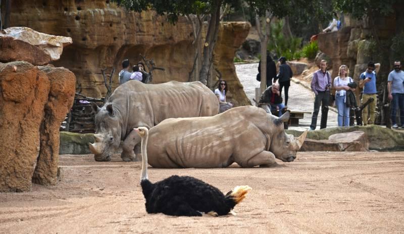 Primavera 2018 - visitantes en la Sabana africana de BIOPARC Valencia observando a los rinocerontes y las avestruces