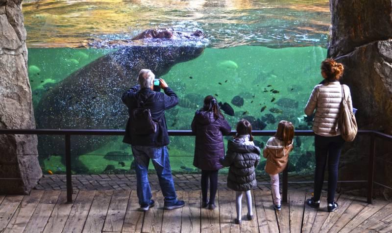 Enero 2018 - visitantes cara a cara con los hipopótamos en BIOPARC Valencia