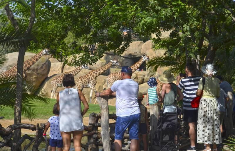 BIOPARC Valencia se consolida como destino para los turistas nacionales e internacionales de la ciudad