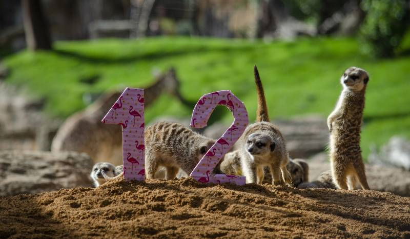 12 Aniversario Febrero 2020 - BIOPARC