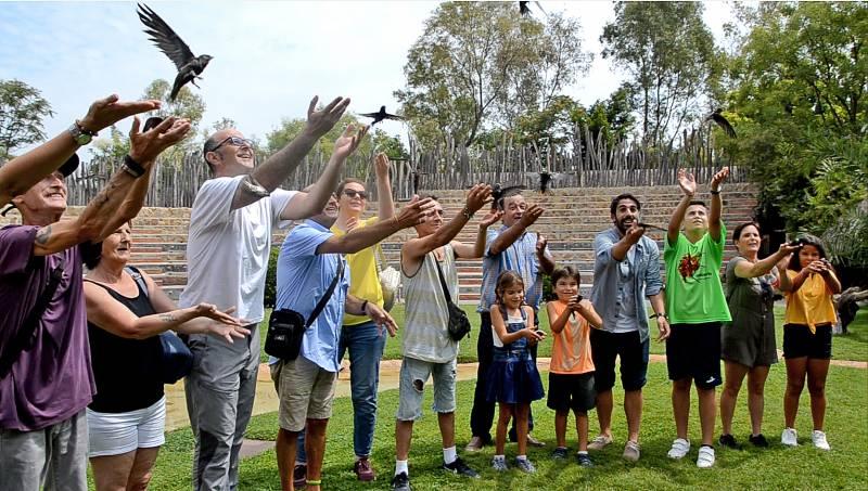 Suelta colectiva de vencejos en BIOPARC Valencia