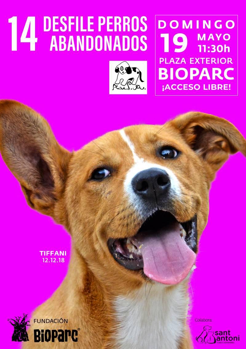 Cartel 14º desfile de perros abandonados AUPA - BIOPARC