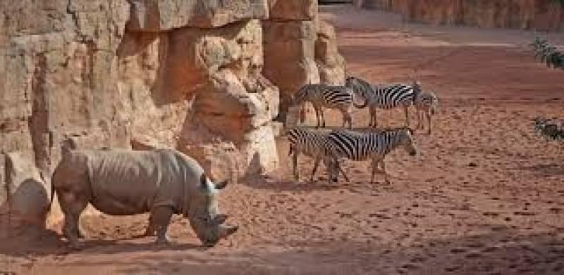 Hipopotamo y zebras.EPDA