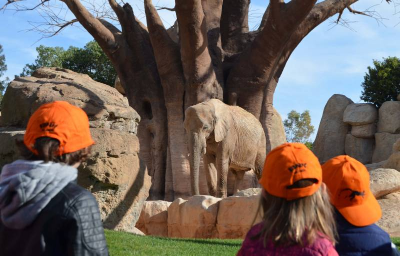 EXPEDICIÓN ÁFRICA Pascua 2018 BIOPARC Valencia Elefantes