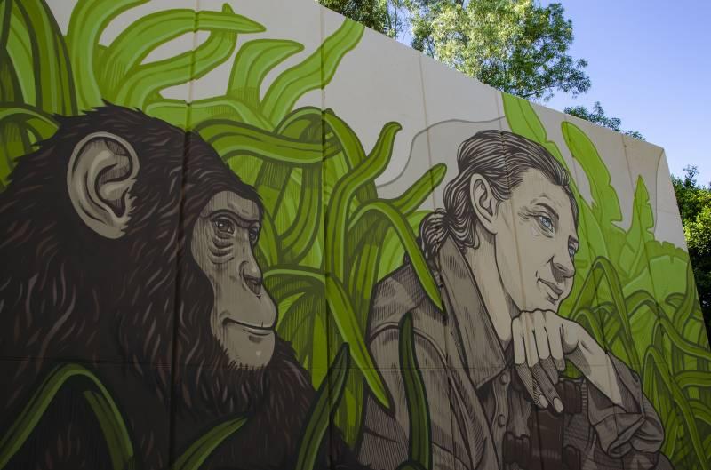 Mural Jane Goodall./ EPDA