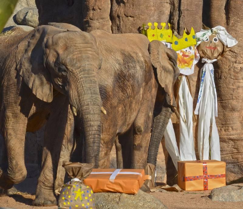 Los animales de BIOPARC Valencia reciben los regalos de Reyes Magos - elefantes - detalle